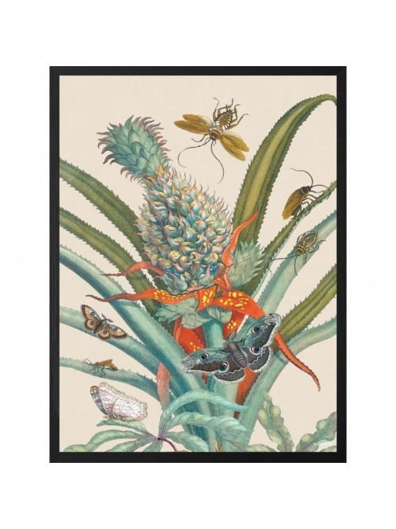 Vanilla fly poster 20 - 25 botanical 1 - cornice nera