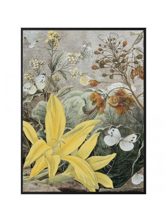 Vanilla fly poster 20 - 25 yellow lily - cornice nera