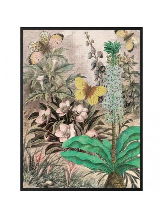 Vanilla fly poster 20 - 25 botanic - cornice nera
