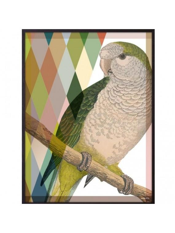 Vanilla fly poster 20 - 25 proud parrot - cornice nera
