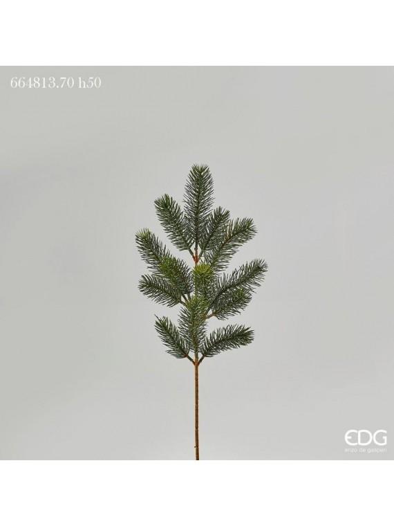 Edg pino ramo h50