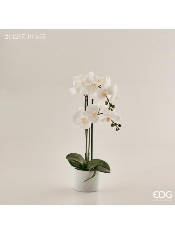 Edg orchidea phal pianta con vaso h55