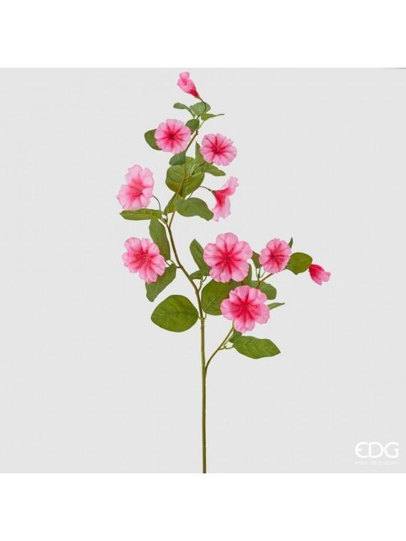 Edg petunia eden ramo h100