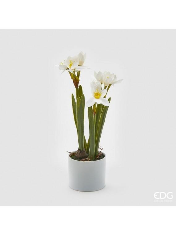 Edg narciso real con vaso h46