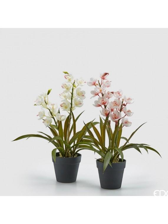 Edg orchidea cymb con vaso(2 colori)h54