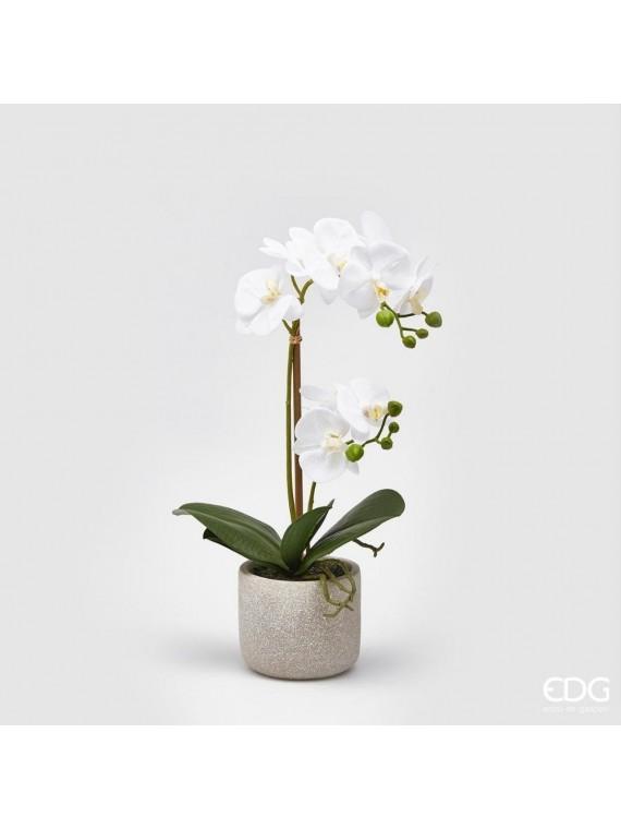 Edg orchidea bianca phal pianta con vaso h42