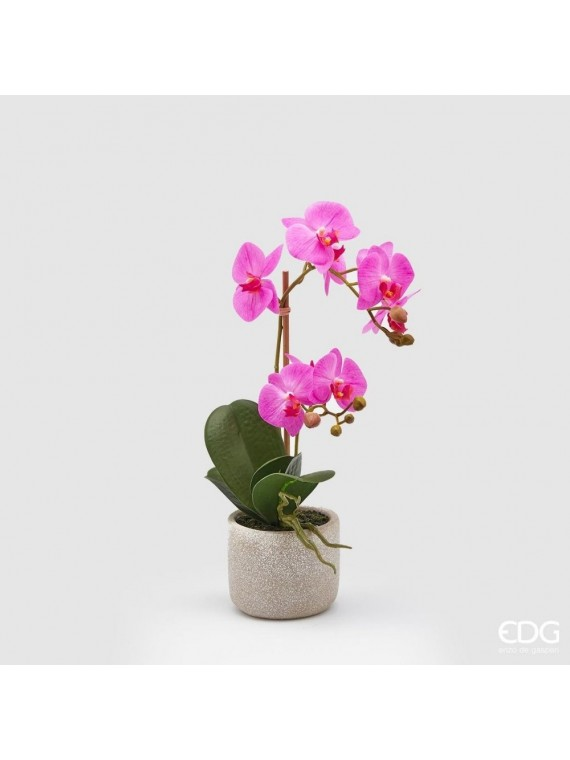 Edg orchidea fuxia phal pianta con vaso h42