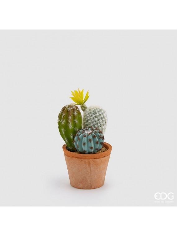 Edg cactus mix fior con vasocotto h19