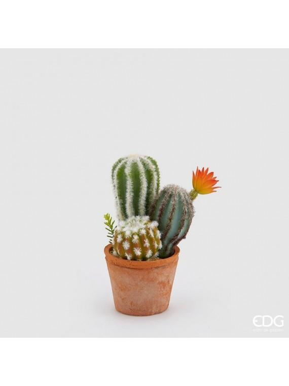 Edg cactus mix fior con vasocotto h23