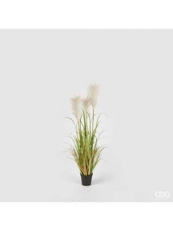 Edg pampas pianta con vaso h105