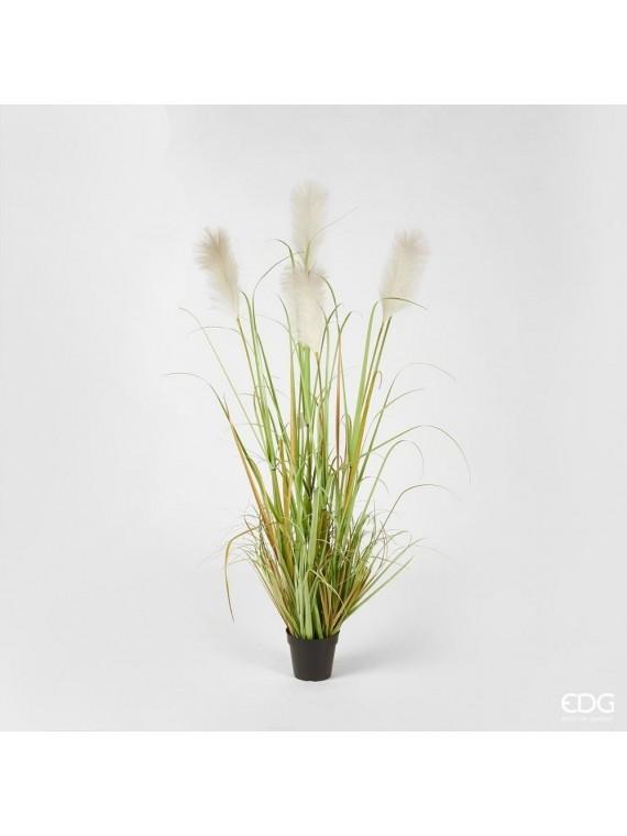 Edg pampas pianta con vaso  h152