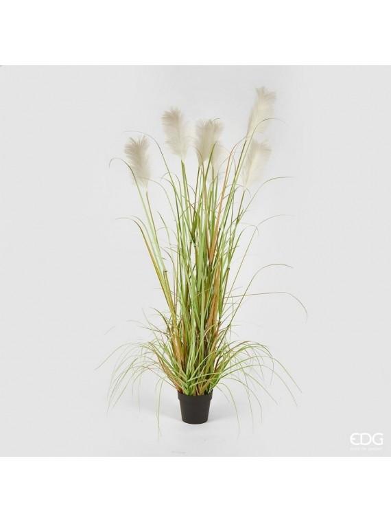 Edg pampas pianta con vaso h183