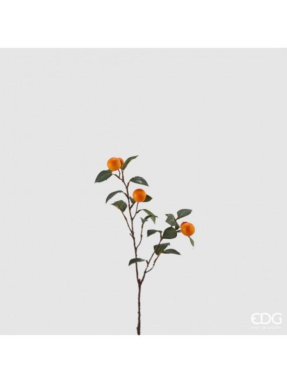 Edg kumquat ramo h56